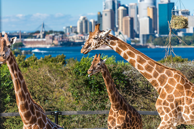 Taronga Zoo Sydney attractions for Kids