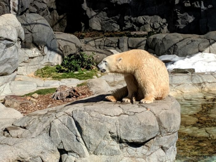 Polar bears queensland